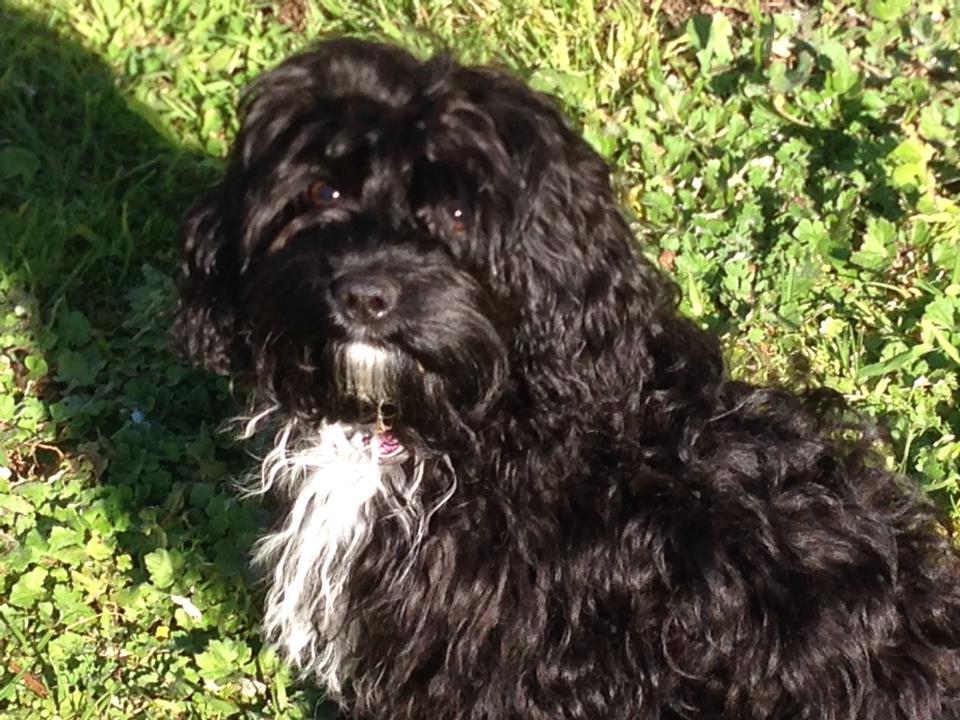 Bella Banksia Park Puppy