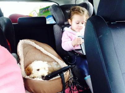 Banksia Park Puppy Maggie