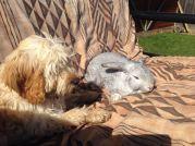 Maggie Banksia Park Puppy