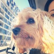 Pixie-Lou Banksia Park Puppy