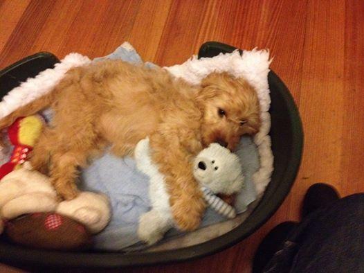 Phoebe Banksia Park Puppy