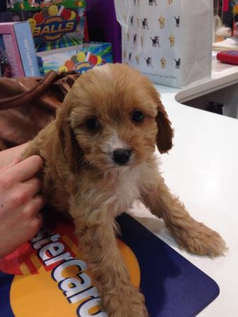 Rosie Banksia Park Puppy