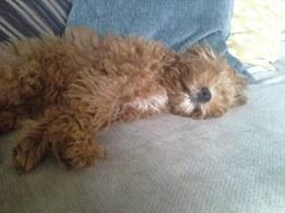 Oska Banksia Park Puppy