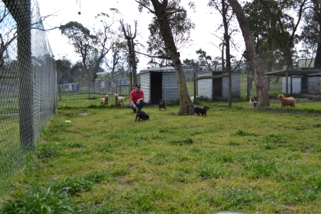 Banksia Park Live-in yards