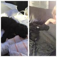 Banksia Park Puppies darcy 4