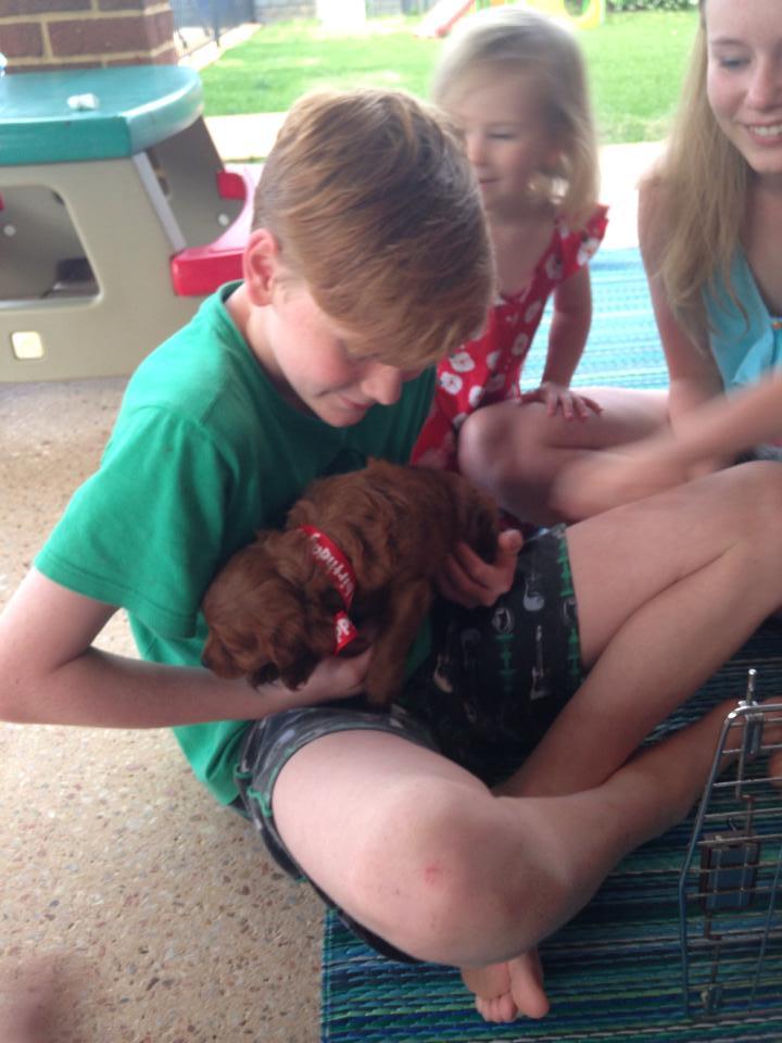 Banksia Park Puppies surprise
