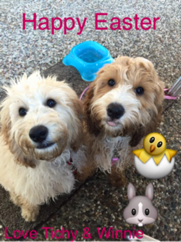 Banksia Park Puppies Winnie and Tichy