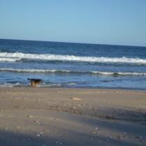 Scatter beach Banksia Park Puppies