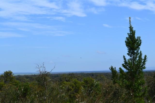 Banksia Park Puppies View