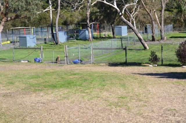 Live-in yards at Banksia Park Puppies
