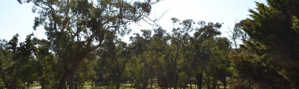 Park land Banksia Park Puppies