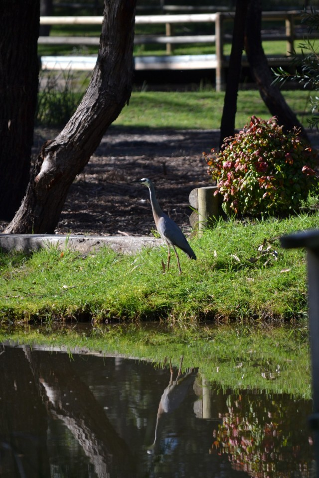 Wildlife at Banksia Park
