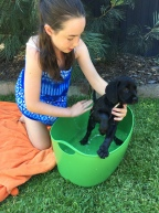 Banksia Park Puppies review Cavador Lola