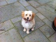 Millie Banksia Park Puppy