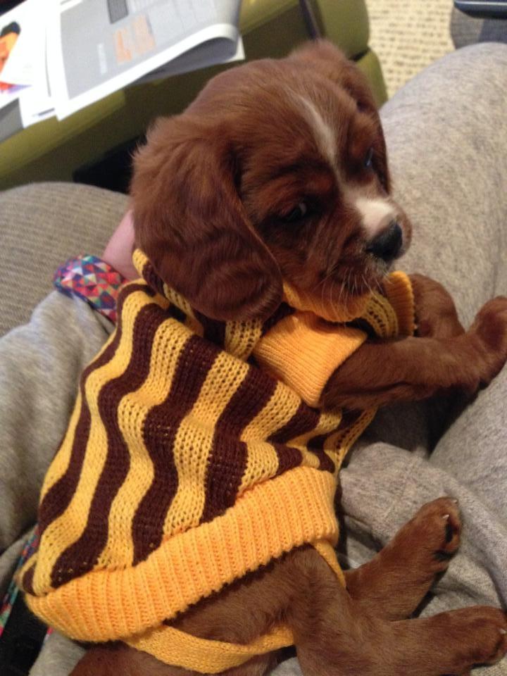 Lenny Banksia Park Puppy