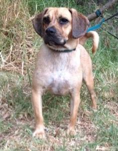 Harley Banksia Park Puppy