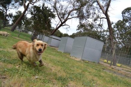 Banksia Park Puppies Amalia