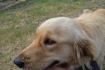 Banksia Park Puppies Aminda