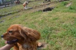 Banksia Park Puppies Risso