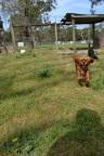 Banksia Park Puppies Rochel