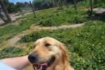 Banksia Park Puppies Elanora loving a pat