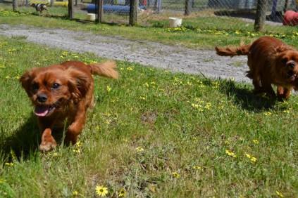Mami and Rosara Banksia Park Puppies