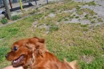 Rosara Banksia Park Puppies