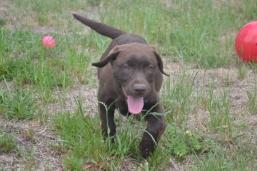 Banksia Park Puppies Meeka 1