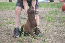 Banksia Park Puppies Mishka 3