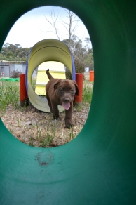 Banksia Park Puppies Mishka 5