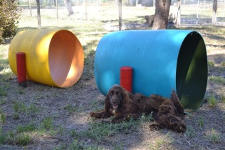 Banksia Park Puppies Playground