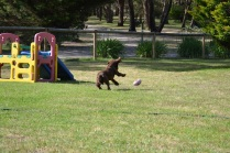 Banksia Park Puppies Wooster 3