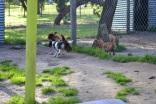 Banksia Park Puppies Bell