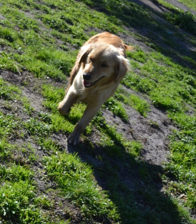 Running in one of the live-in yards