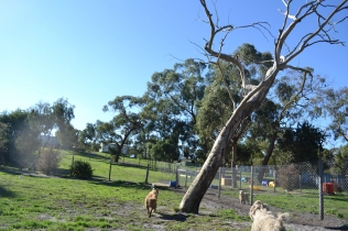 Aminda and Luna in a live in yard