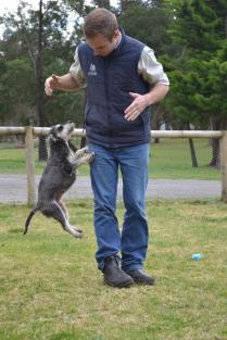 Banksia Park Puppies Annabelle