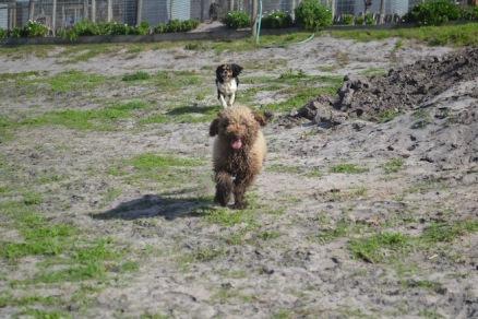 Banksia Park Puppies Ayasha - 1 of 36