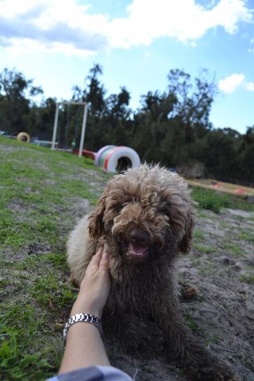 Banksia Park Puppies Ayasha - 20 of 36