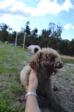 Banksia Park Puppies Ayasha - 24 of 36