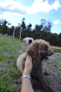 Banksia Park Puppies Ayasha - 25 of 36