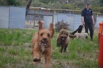 Banksia Park Puppies Ayasha