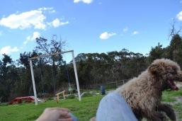 Banksia Park Puppies Ayasha - 8 of 36