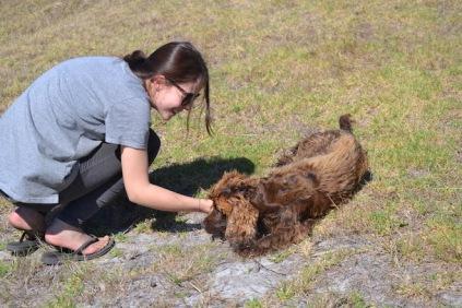 Banksia Park Puppies Bridey - 1 of 16 (11)