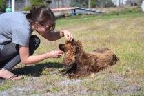 Banksia Park Puppies Bridey - 1 of 16 (13)