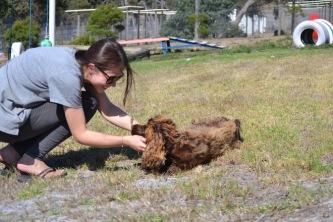 Banksia Park Puppies Bridey - 1 of 16 (2)