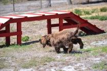 Banksia Park Puppies Bridey - 1 of 16 (6)