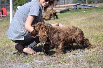 Banksia Park Puppies Bridey - 1 of 16 (8)