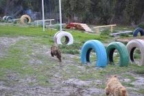Banksia Park Puppies Brutus - 1 of 14
