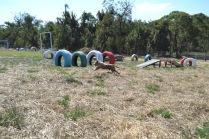 Banksia Park Puppies Brutus - 1 of 20 (11)