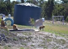 Banksia Park Puppies Brutus - 1 of 20 (13)